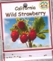 california-wild-strawberry-front-medium