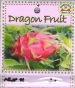 dragon-fruit-front-medium