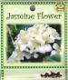 jasmine-flower-front-medium