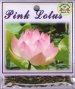 pink-lotus-front-medium