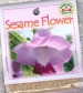 sesame-flower-front-medium