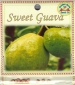 sweet-guava-front-medium