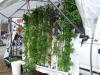 Truck Mounted Zipgrow towers (Medium)