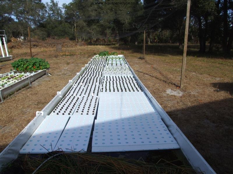 Sielsie aquaponics equipment list for Hydroponic grow bed