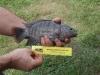 Fish (Medium)