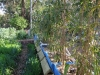 Bamboo line (Medium)