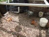 wood bed removed chickens inspecting (Medium)