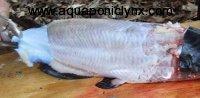 pealing fish