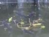 fish-feeding-150x99