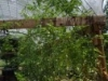 growing-jungle-June-5-2008-126x150