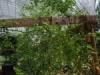 growing-jungle-June-5-2008-150x150
