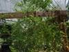 growing-jungle-June-5-2008-252x300