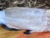 pealing-fish-150x98