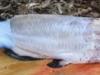 pealing-fish