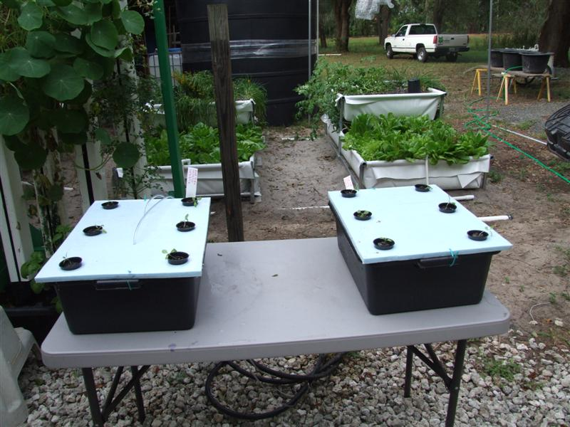 Non recirculating hydroponic test with aquaponic water