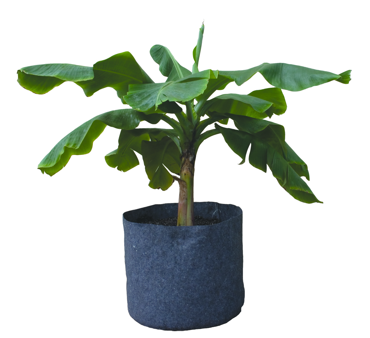 Root Pot with plant