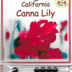 California Canna Lily