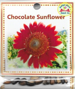 Chocolate Sunflower