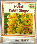 Hawaii Kahili Ginger