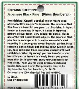 Japanese Bonsai Black Pine