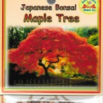 Japanese Bonsai Maple Tree