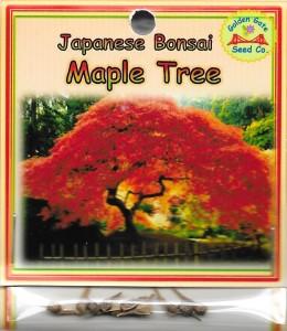 Japanese Bonsai Maple Tree