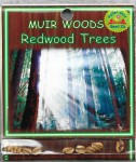 Muir Woods Redwood Trees
