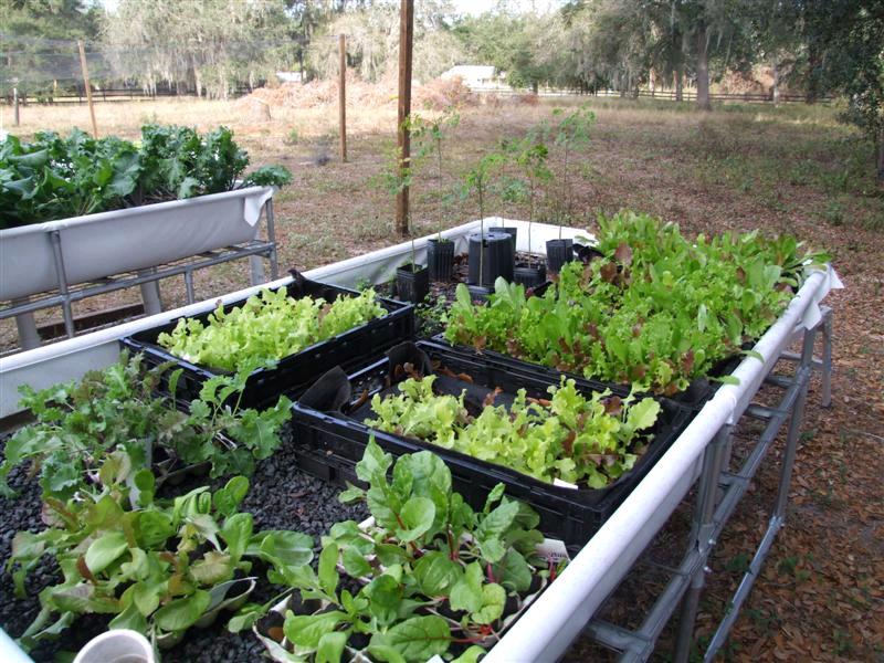 media-bed-lettuce-good