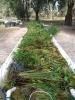 pond-plant-bed-medium