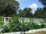 Aquaponic Tower and pond Plants grown