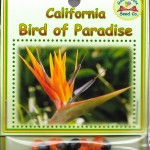 California Bird Of Paradise